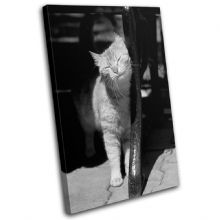 Tabby cat  Content Animals - 13-0516(00B)-SG32-PO
